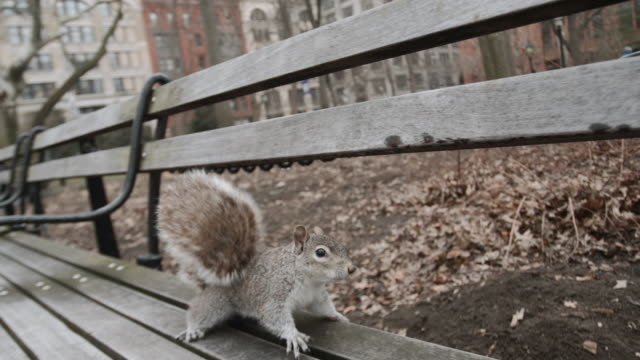 closeup shot of a squirrel in a city park - squirrel stock videos and b-roll footage