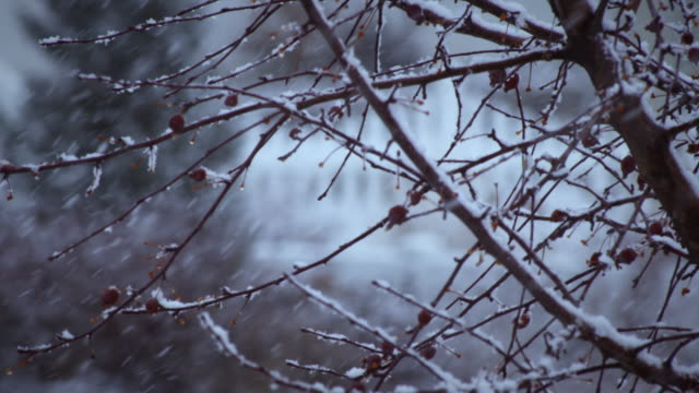 close-up shot of a tree's branches during a snowstorm - プロボ点の映像素材/bロール