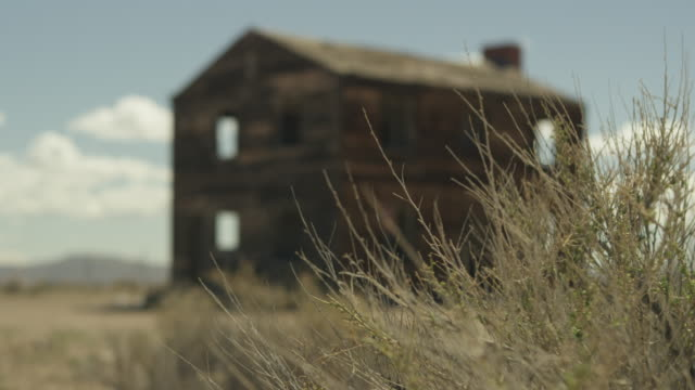 close-up shot of a weed with a wooden house in the background at nevada test site - nevada stock videos & royalty-free footage