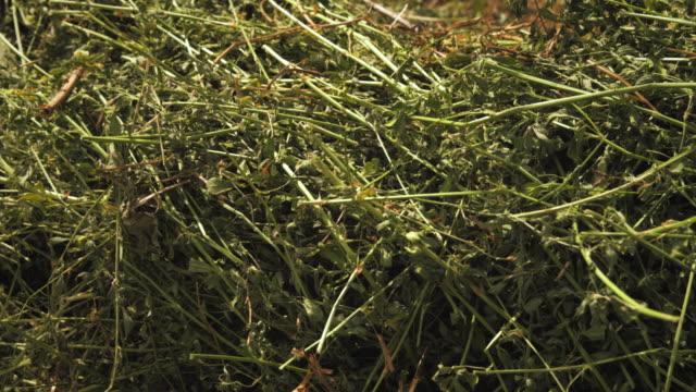 close-up shot of banches hay, and grass. - プロボ点の映像素材/bロール