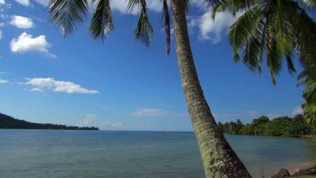 close-up shot of coconut tree on moorea beach - insel moorea stock-videos und b-roll-filmmaterial