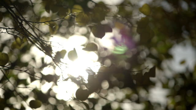 close-up shot of dappled daylight coming through a tree in patriarshiye ponds in moscow, russia. - branch plant part stock videos & royalty-free footage