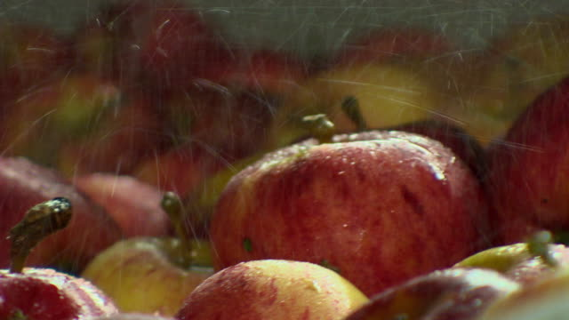 close-up shot of gala apples being sprayed with water at a processing plant in kent, uk. - apple fruit stock videos & royalty-free footage