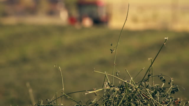 close-up shot of hay on the farm - hay background stock videos & royalty-free footage