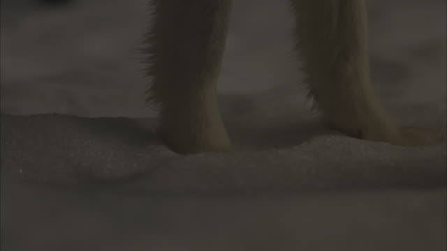 close-up shot of paws of dogs standing in the snow. - paw stock videos and b-roll footage