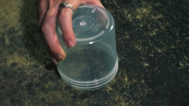 closeup shot of person capturing and releasing arachnid - arachnid stock videos and b-roll footage