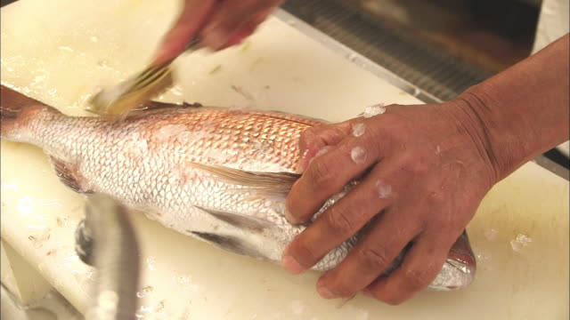 Close-up shot of scales being removed from a sea bream