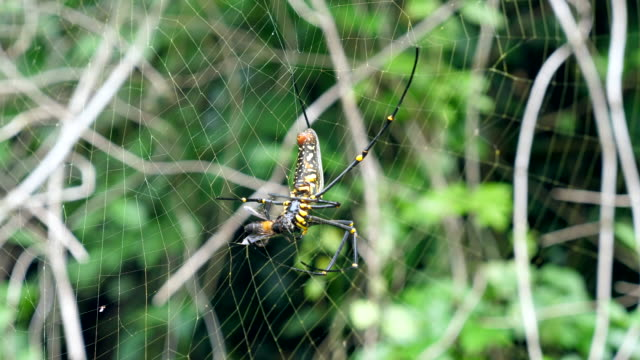 close-up shot of spider hunting victim in forest - animal hair stock videos & royalty-free footage