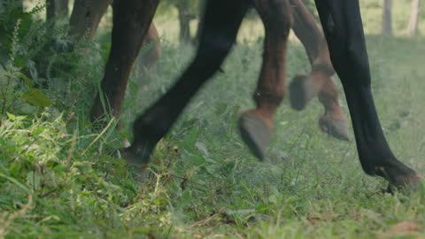 vidéos et rushes de close-up shot of the legs of sprinting horses - conflit