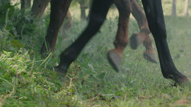 close-up shot of the legs of sprinting horses - historical reenactment stock videos & royalty-free footage