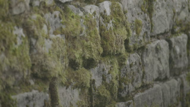 close-up shot of the mossy stone wall in military bath house at the vindolanda roman fort - archaeology stock videos & royalty-free footage