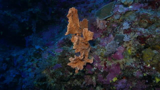 vídeos y material grabado en eventos de stock de foto de submarino esponja naranja sala de estar en el arrecife - esponja