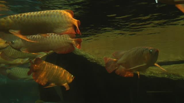 vídeos y material grabado en eventos de stock de closeup shot underwater fish hong kong kwangtung china - grupo mediano de animales