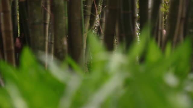 vídeos de stock e filmes b-roll de closeup shot with rack focus of grass with trees. - 2013