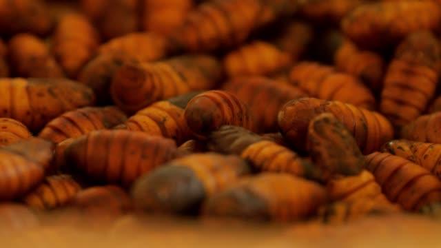 Close-up silkworm.