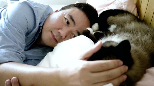 close-up sleepy kitten - pet owner stock videos & royalty-free footage