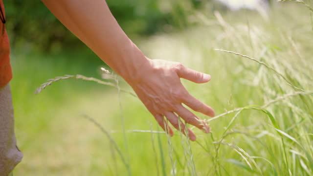 nahaufnahme zeitlupe clip der frau hand sanft gras berühren, während in der natur zu fuß - einzelne frau über 30 stock-videos und b-roll-filmmaterial