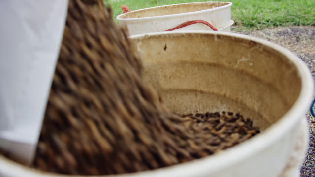 close-up, slow motion shot of fiber horse feed being poured into a five pound bucket on a farm - livestock stock videos & royalty-free footage