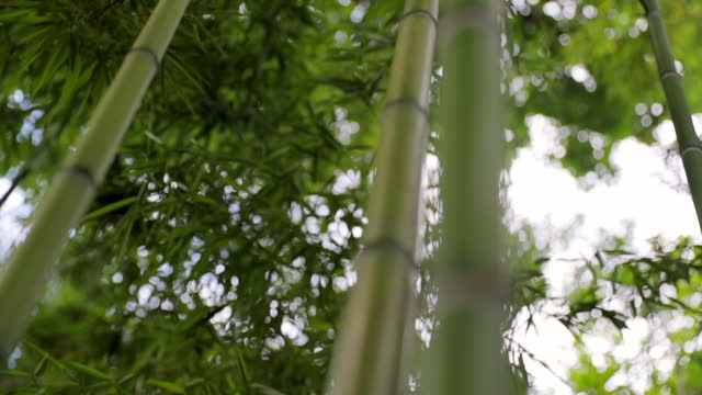 close-up slow motion shot of green bamboo plants in garden - shanghai, china - stem stock videos & royalty-free footage
