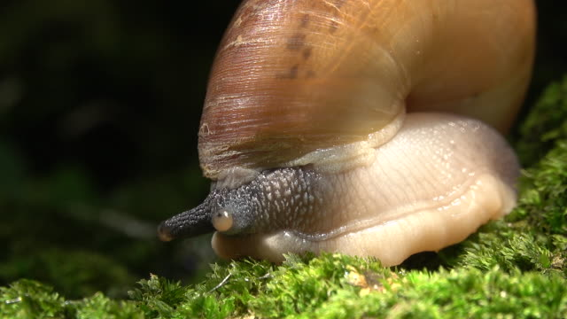 close-up snail in forest - animal shell stock videos & royalty-free footage