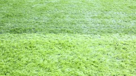 クローズ アップのサッカー場。 - grass点の映像素材/bロール