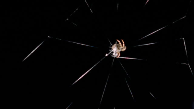 close-up spider weaving web in concentric pattern - concentric stock videos and b-roll footage