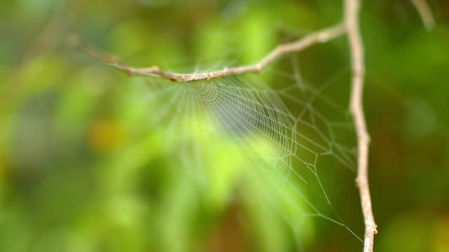 Close-up Spider Web Against Wind with Green Nature Background