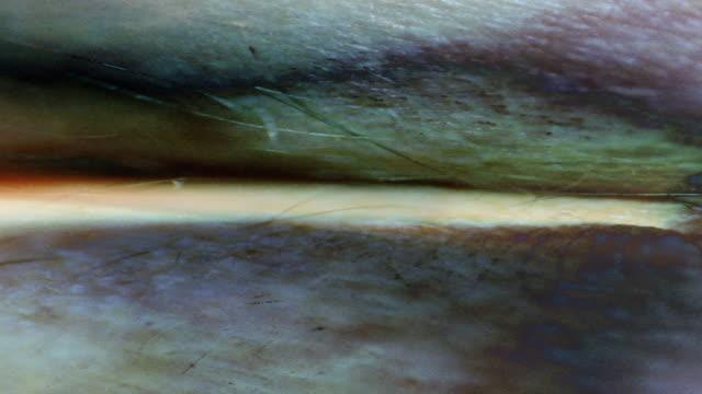 stockvideo's en b-roll-footage met a close-up, strange superimposition of images of human skin. - onbekend geslacht