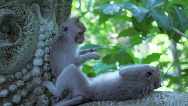 Close-up: Sweet Monkeys Playing on Stone Statue
