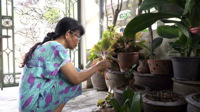 close-up to senior woman organize the ornamental tree in her home - thai ethnicity stock videos & royalty-free footage