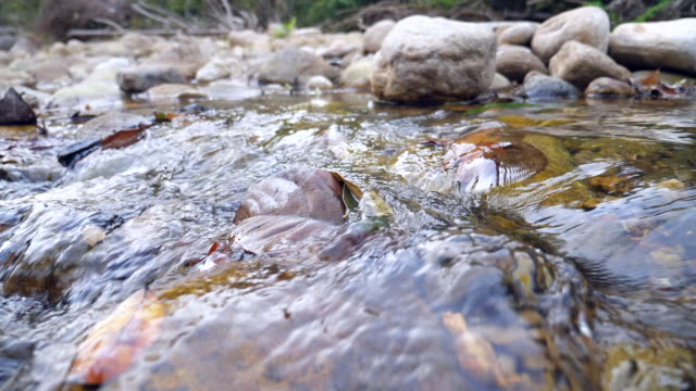 close-up tranquil flow of river, super slow motion - stream body of water stock videos & royalty-free footage