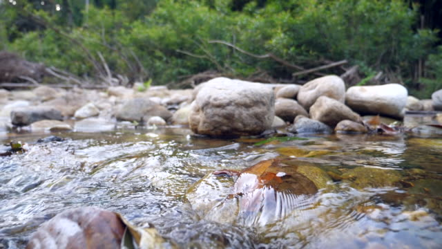 stockvideo's en b-roll-footage met close-up tranquil flow of river, super slow motion - stroom stromend water