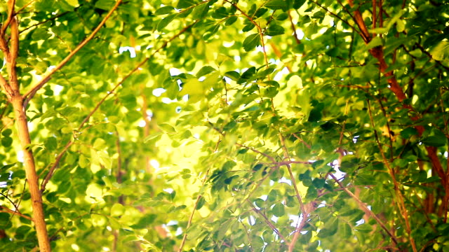 Closeup tree with green leaves in the wind and sunshine