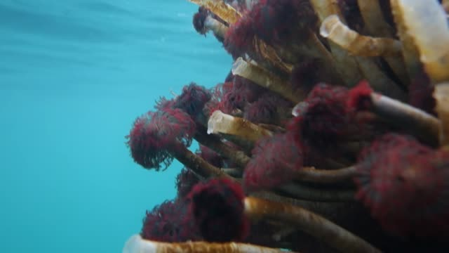 close-up: tube worm on coral - sea worm stock videos & royalty-free footage