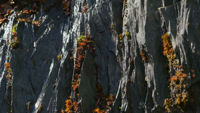 close-up view of moss on slate rocks, rhineland-palatinate, germany, europe - moos stock-videos und b-roll-filmmaterial