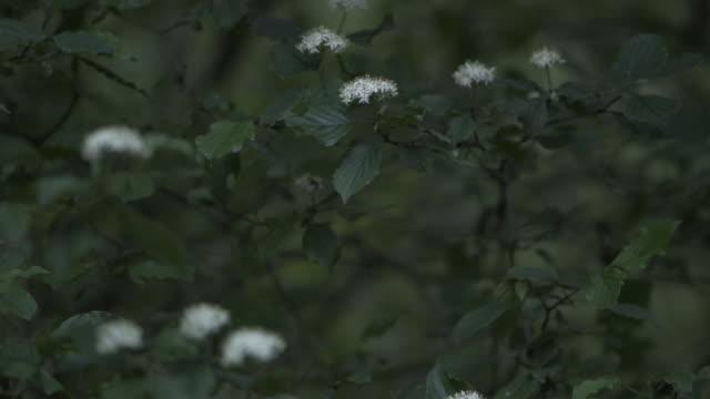 vidéos et rushes de vue de plan rapproché des usines sauvages. plantes de soufflage de vent un jour pluvieux. - graine