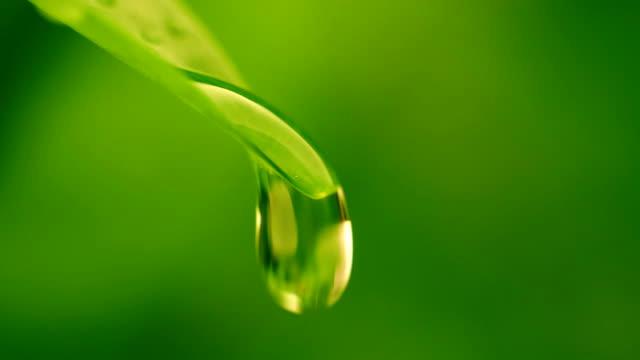 葉から落ちるクローズアップ水滴 - leaf点の映像素材/bロール