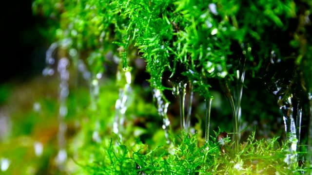 vídeos y material grabado en eventos de stock de agua cerca de verde musgo - musgo flora