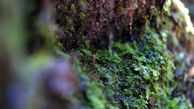 close-up water flowing from green moss - moss stock videos & royalty-free footage