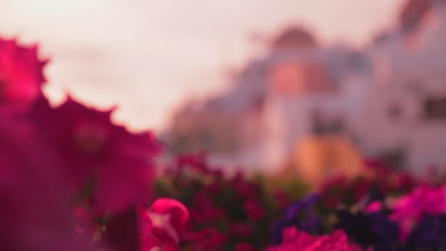 close-up: wild flowers and buildings in santorini, greece - insel santorin stock-videos und b-roll-filmmaterial