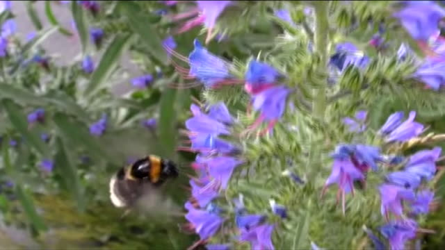 close-ups of bumblebees - film montage stock videos & royalty-free footage