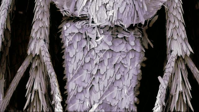 clothes moth, sem - microscopio elettronico a scansione video stock e b–roll