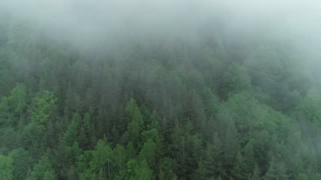 cloud above the big pinaceae forest - pinaceae stock videos & royalty-free footage