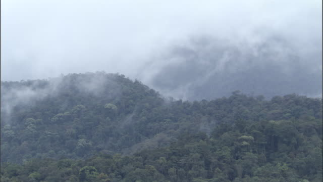 cloud billows over rainforest, papua new guinea - hill stock videos & royalty-free footage