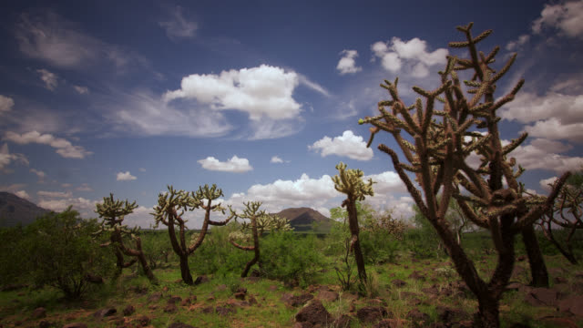tl cloud drifts in blue sky over cholla cacti, usa - clima arido video stock e b–roll