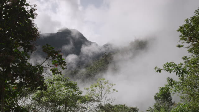 vídeos de stock e filmes b-roll de cloud drifts over moist cloud forest, ecuador - árvore tropical
