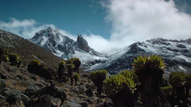 Cloud drifts over rocky peak and giant groundsels, Mount Kenya