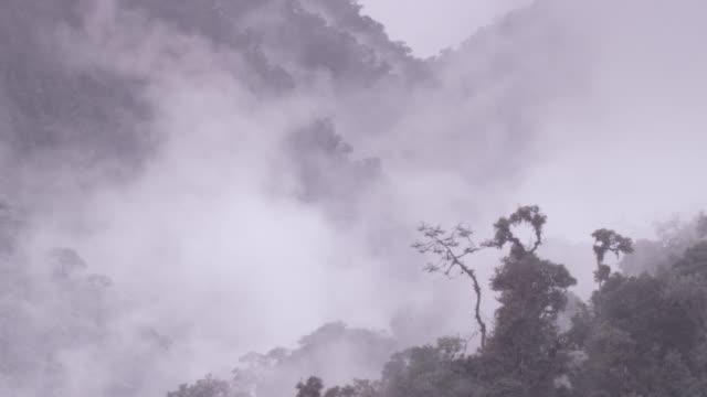 Cloud drifts through moist cloud forest, Ecuador