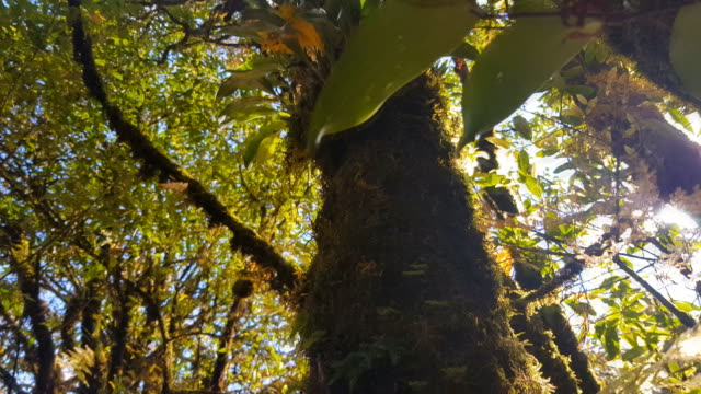 cloud forest of biological reserve monteverde, costa rica - reserva animal stock videos and b-roll footage
