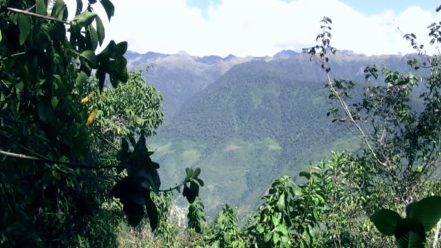 Cloud Forest on the Inca Trail, Peru